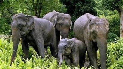 Wildlife Tour of South India