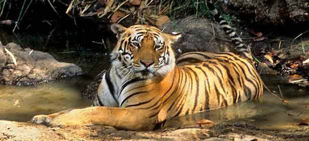 Gir National Park Tour