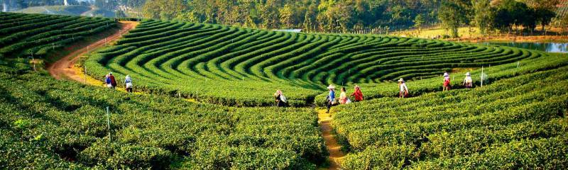 Darjeeling :- A Quick and Handy Travel