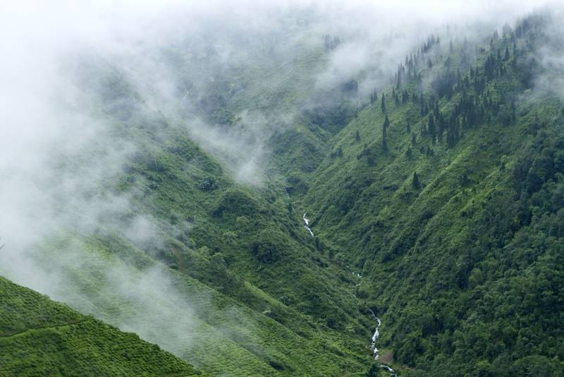 Darjeeling Tour :- Gently Rolling Hills and Tea Estates