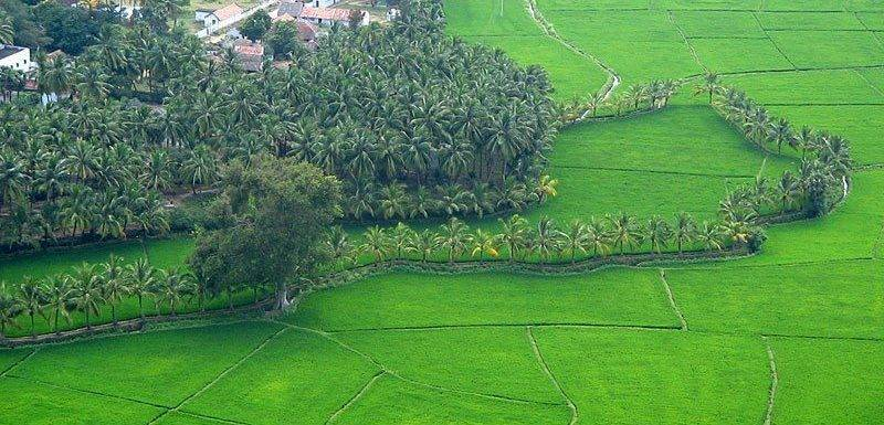 Glimpses Of Kerala Culture