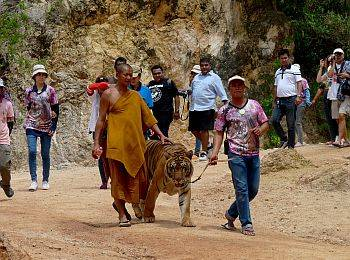 India Temple and Tiger Tour Package