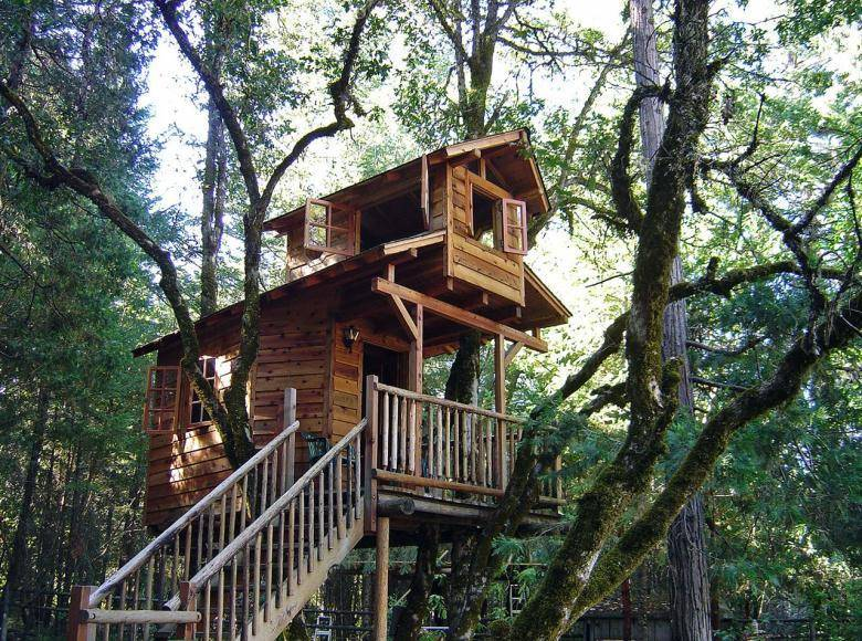 Live in a Tree-House