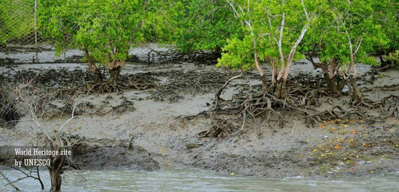 Untouched Mangrove Forests