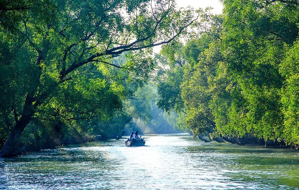 Backwaters Sundarban
