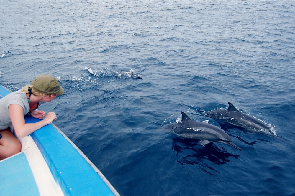 Dolphin Spotting Maldives