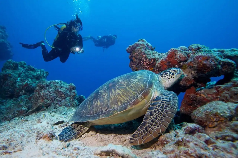 Maldives Scuba Diving