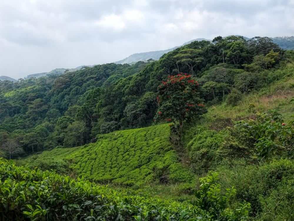 Sinharaja Rainforest Sri Lanka