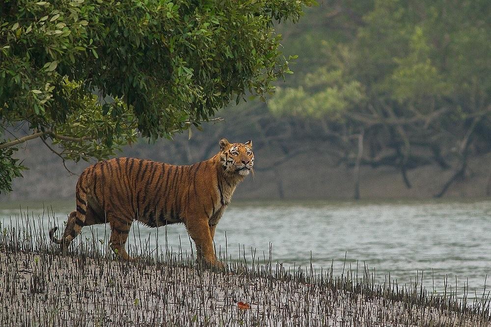 Sundarbans National Park