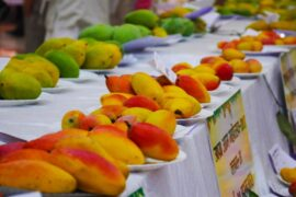 International Mango Festival Delhi