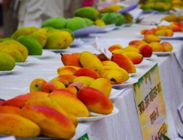 International Mango Festival Delhi