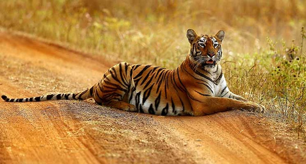Maharashtra Wild Trail Journey