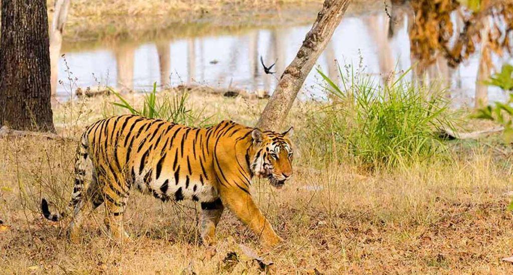 Jungles of India