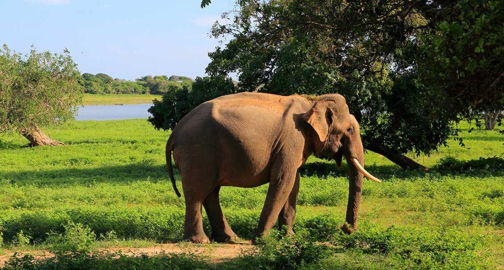 Sri Lanka Wildlife Tour Packages