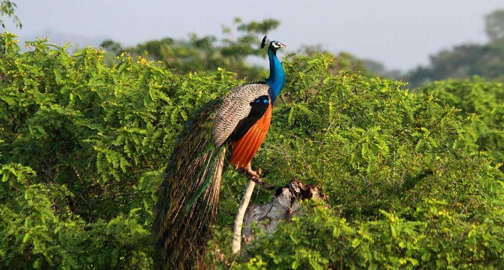 Luxury Escapes Sri Lanka Tour