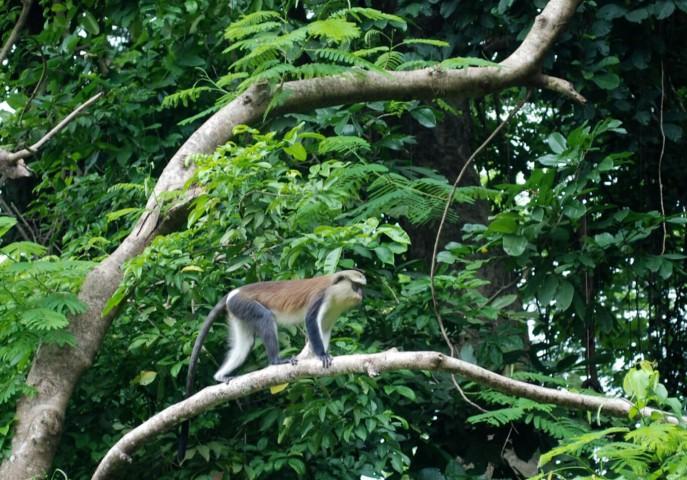 Wildlife & Cultural tour of Ghana