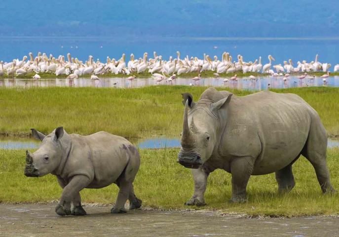 Wild Kenya Tour